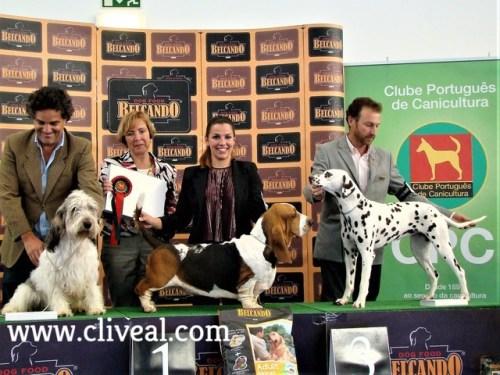 dalmata premiada en exposicion canina