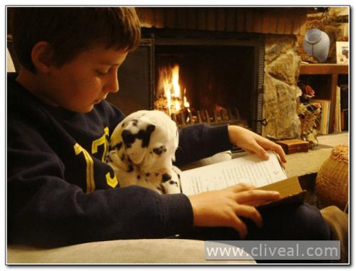 niño leyendo con dálmata en brazos