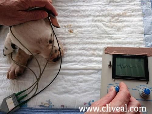 test sordera cachorro con audicion