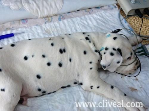 test sordera perro barcelona