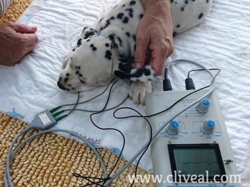 test sordera perro