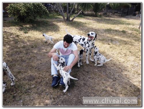 visitando cachorros dálmata sevilla