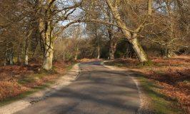 Bolderwood Arboretum Ornamental Drive