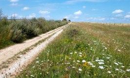 Wild flowers by the Ridgeway Trail above East Ilsley