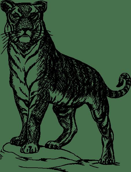 Tiger Family Drawing