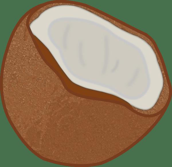 coconut clip art