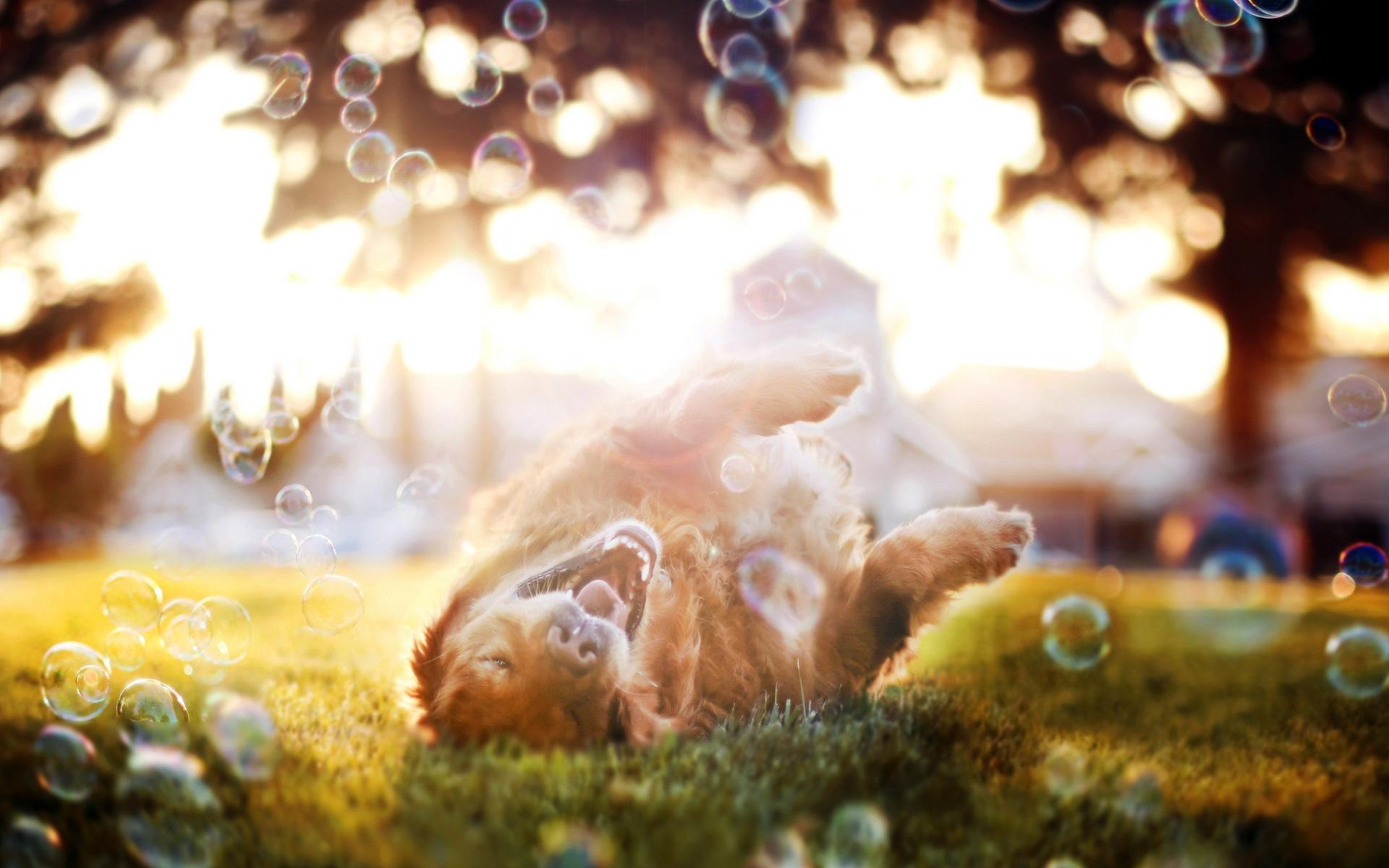 desktop happy friday dog images wallpaper | free images at clker