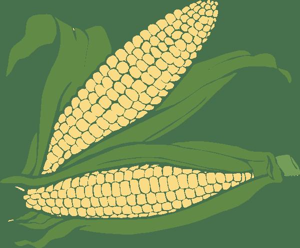 corn clip art - vector