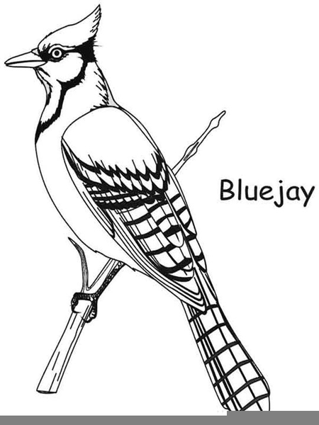 toronto bluejay clipart  free images at clker