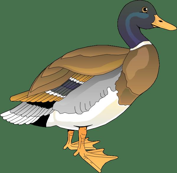 walking duck 2 clip art
