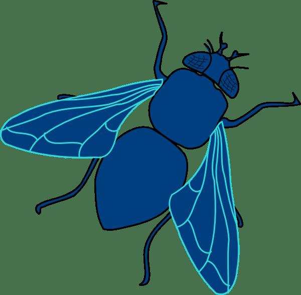 blue fly clip art