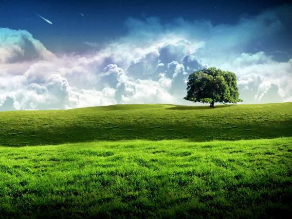 bliss tree green landscape