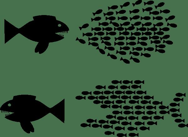 Movement of Rank and File Educators