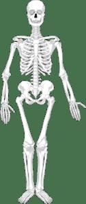 blank skeletal diagram clarion dxz375mp car radio wiring human skeleton clip art at clker.com - vector online, royalty free & public domain