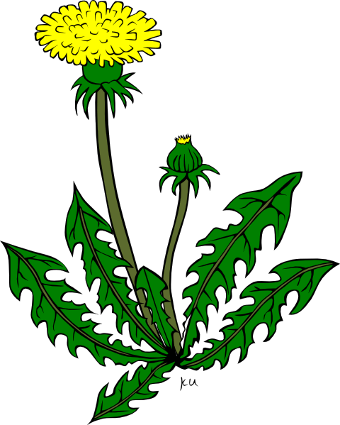 dandelion weed clip art