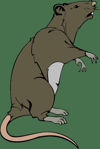 Grey Greedy Rat Clip Art At Vector Clip Art