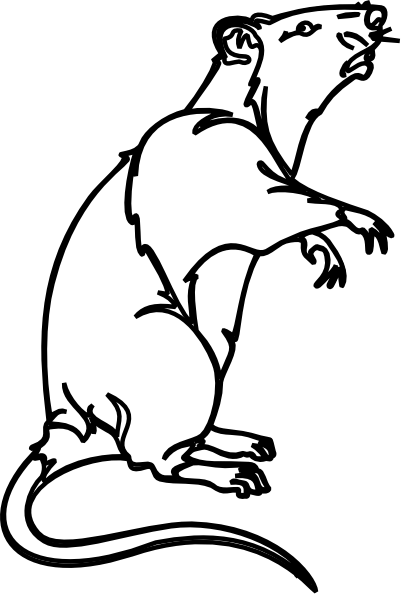 Rat Outline Clip Art At Clker Com