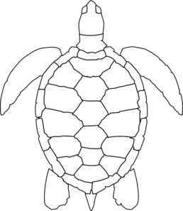 Turtle Shell Clip Art Vector Clip Art Online Royalty Free