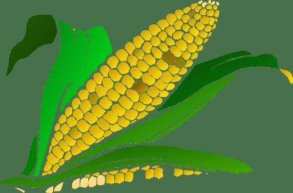 corn gradient clip art