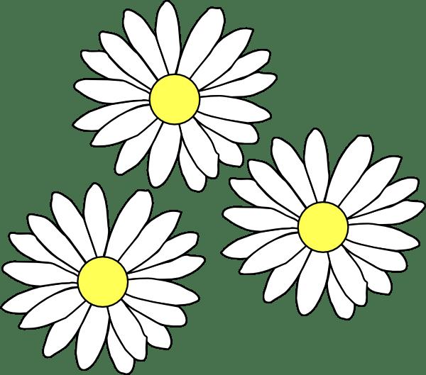 3 daisies clip art
