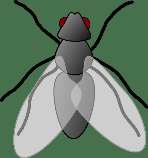 fly2 clip art - vector