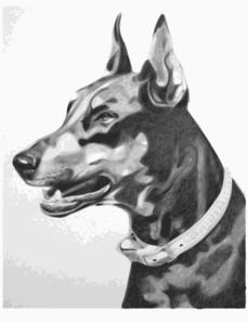 https://i0.wp.com/www.clker.com/cliparts/X/t/V/R/Z/0/dog-portrait-md.png