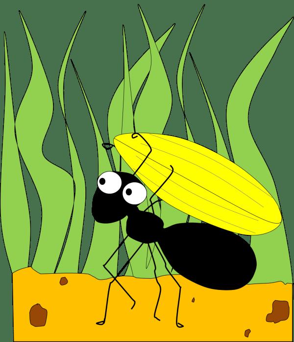 ant free