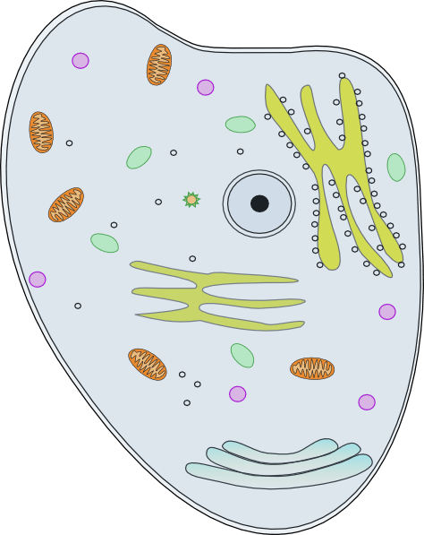 animal cell diagram no labels fender p bass wiring happy clip art at clker.com - vector online, royalty free & public domain