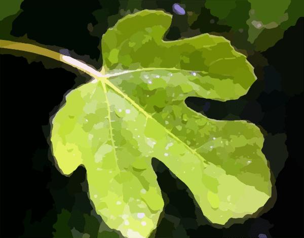 Fig Leaf Clip Art at Clkercom  vector clip art online