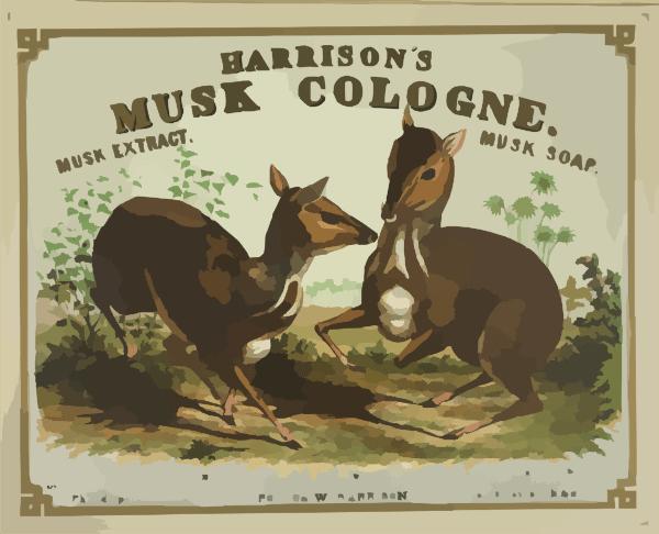 Image result for  musk deer images