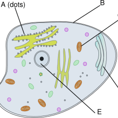 Plant Cell Diagram And Labels 2001 Suzuki Gsxr 750 Wiring Animal Clip Art At Clker.com - Vector Online, Royalty Free & Public Domain
