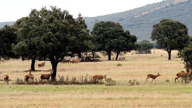 Imagen de archivo del Parque Nacional de Cabañeros en la provincia de Ciudad Real / Fotografía: Lanza - Clara Manzano