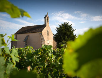 Volnay Clos de la Chapelle: The History of a Vineyard - Clos de la Chapelle