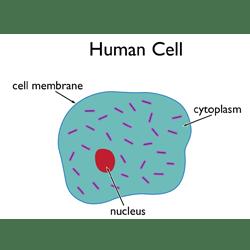 human cell wall diagram labeled gfi wiring stem basics a closer look at cells basic biology
