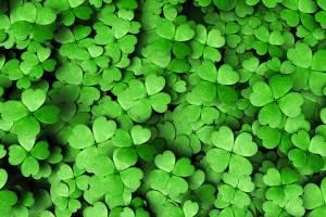 03 false st patricks day facts green