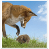 Growth Equity Investors are Hedgehogs; VCs are Foxes