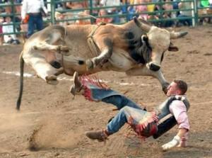 bull man