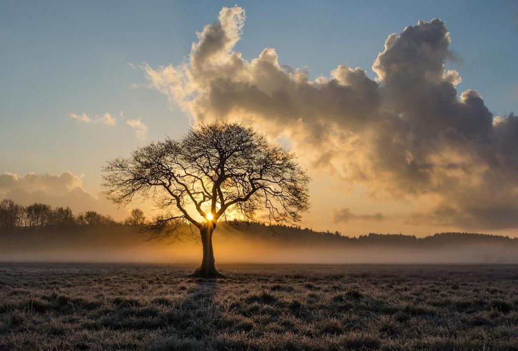 puu ja auringonlasku