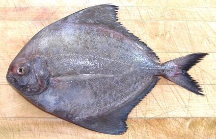 Black Pomfret