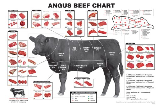 small resolution of what everybody ought to know about beef cuts