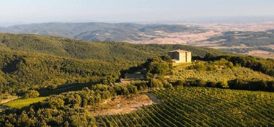 Perché il Brunello di Montalcino è così popolare