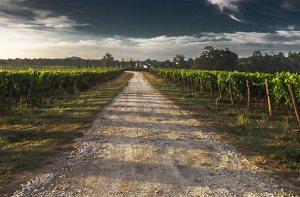 strada del vino nella cultura italiana