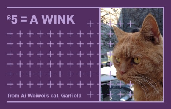 raa aww compensations cat
