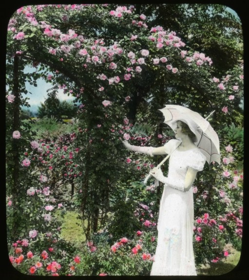 (c) Smithsonian Institution, Archives of American Gardens, J. Horace McFarland Collection