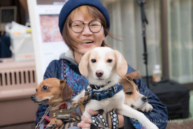 保護犬 犬 シェルター