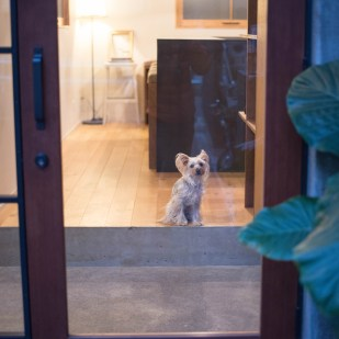 玄関ドア ガラスドア 木製玄関ドア リノベーション ヨークシャテリア
