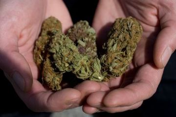 Droga 800 puta jača od marihuane pronadjena u Srbiji