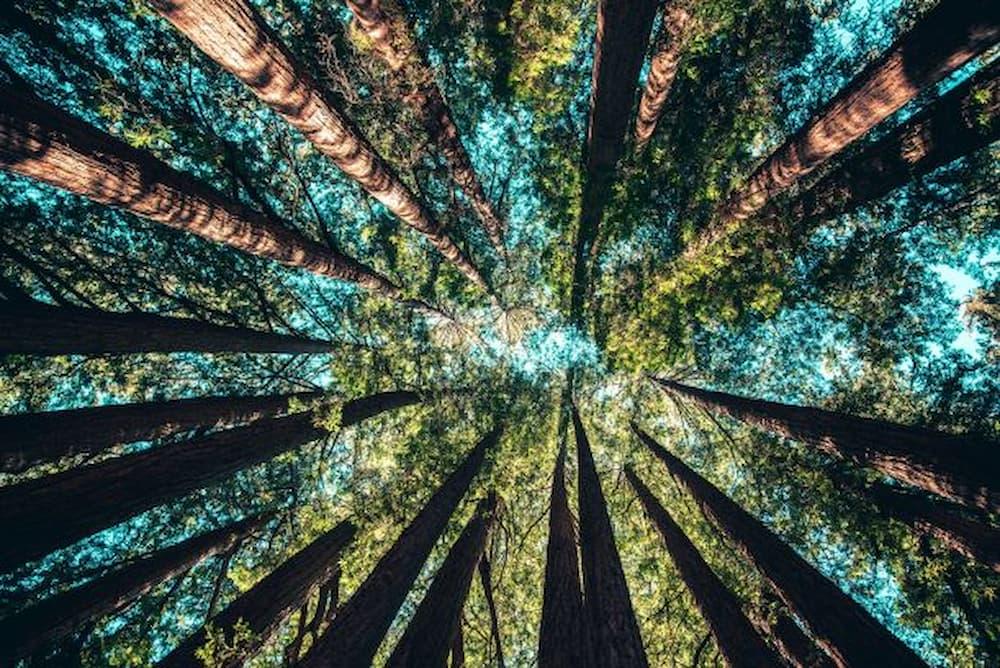 italo-calvino-natura-ambiente