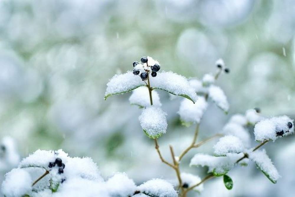 giardino-ada-negri-inverno