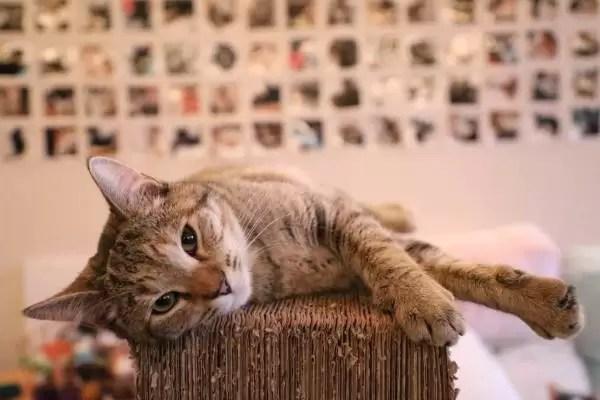 Porque gatos arranham coisas? Como fazer o gato não ...